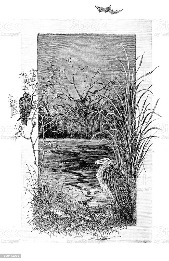 River Scene with vulture, owl and bat stock photo