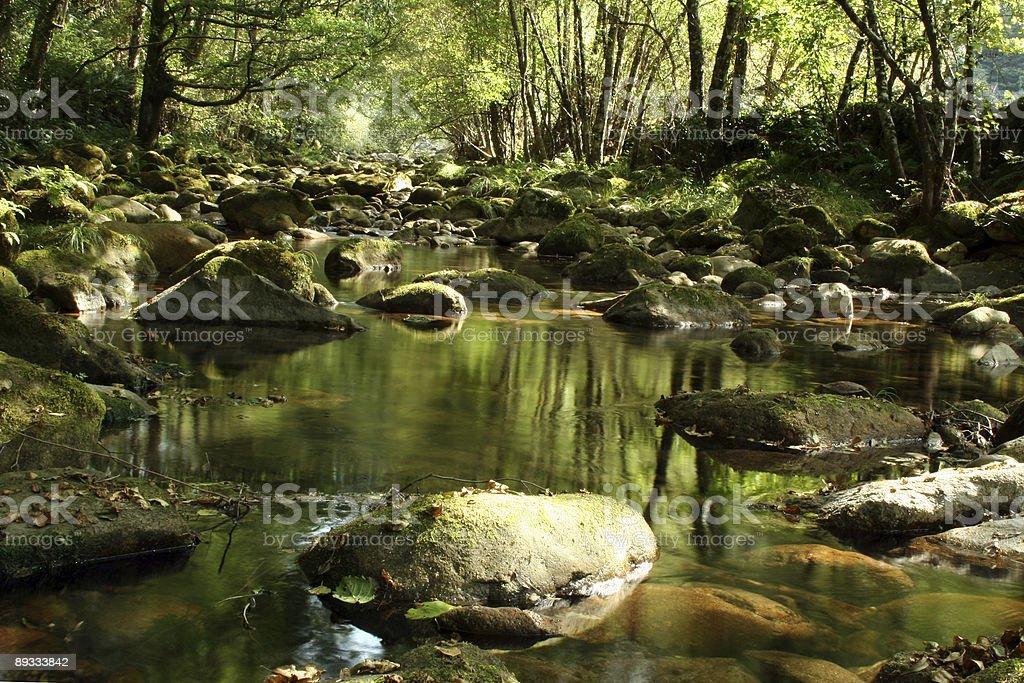 River scenics 2 royalty-free stock photo