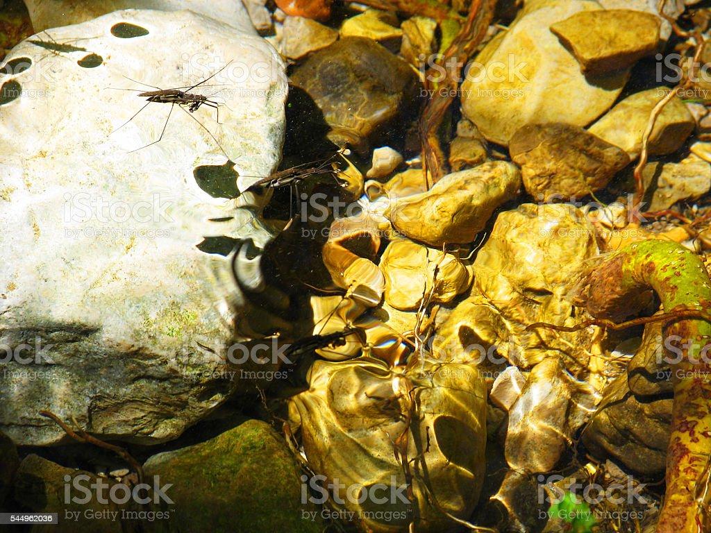River shadows stock photo