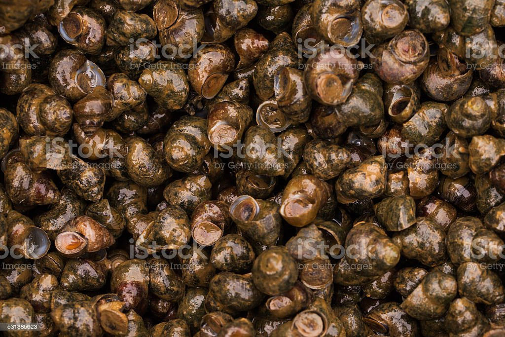 river snail for sale at the asian market. stock photo