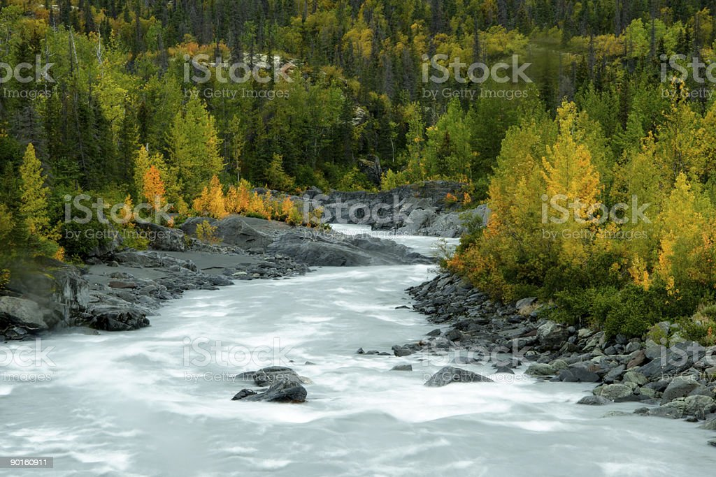 A river stream on a forest mountain stock photo