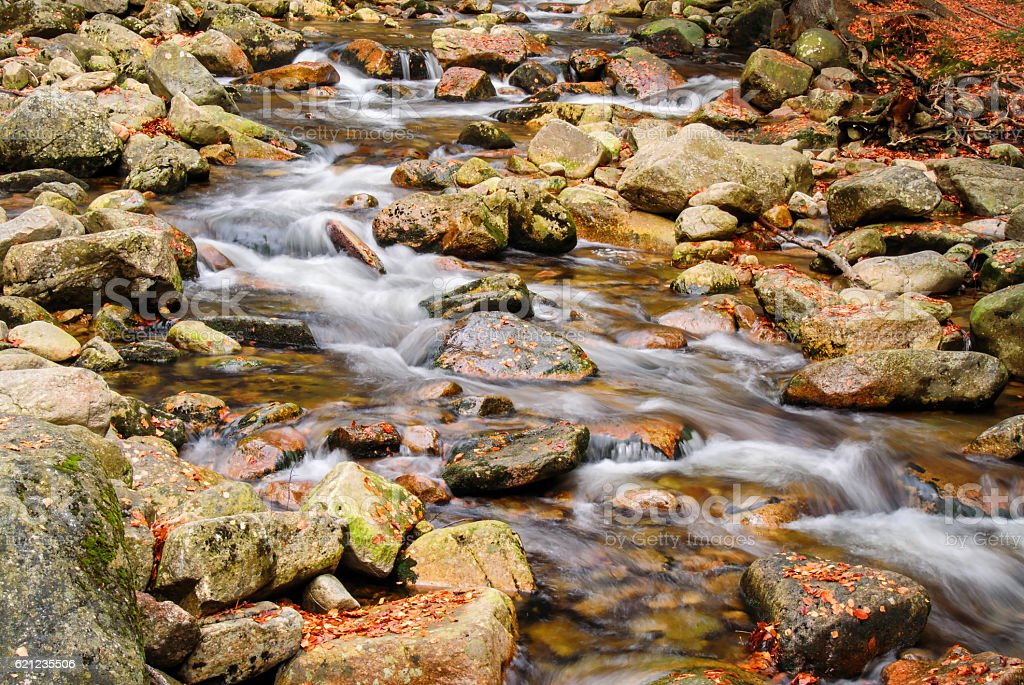 River stream with rocks and autumn leaves stock photo