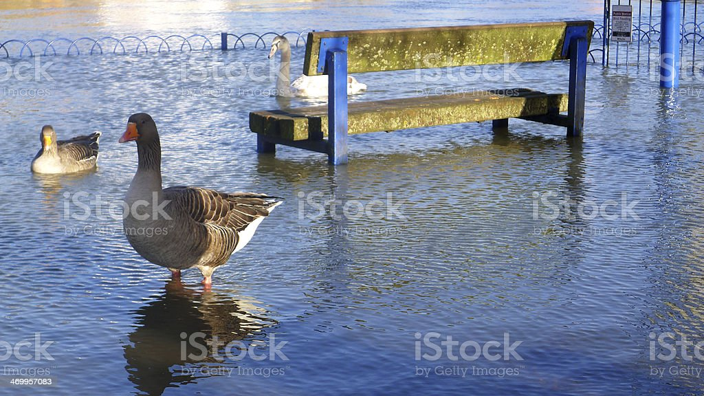 River Thames Floods stock photo