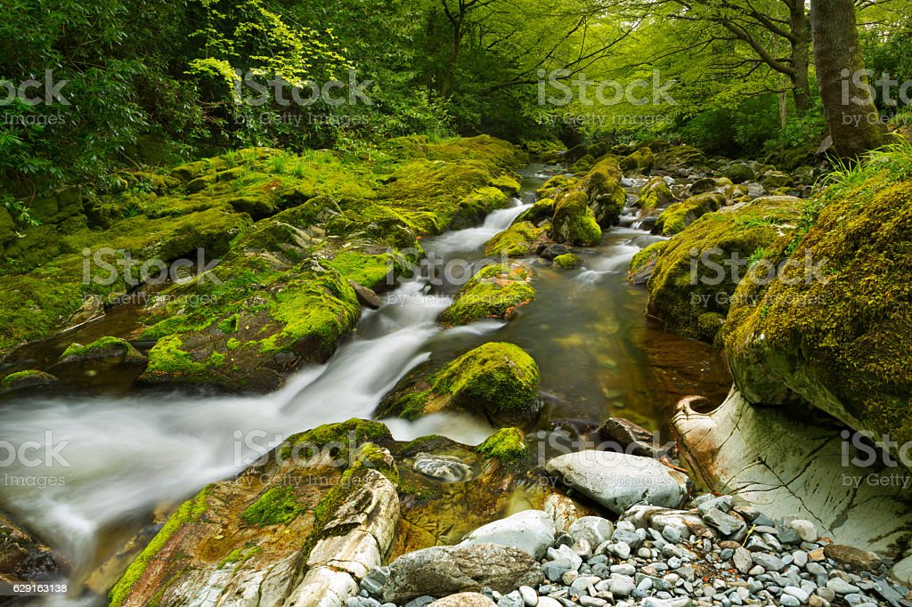 River through lush forest in Northern Ireland stock photo
