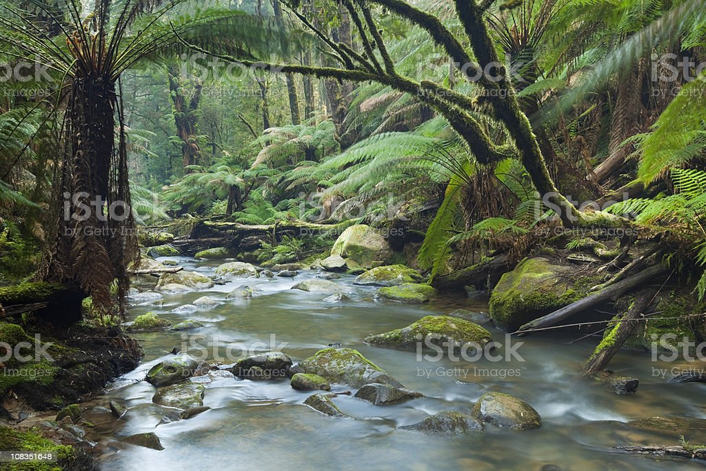 River through lush rainforest in Great Otway NP, Victoria, Australia stock photo