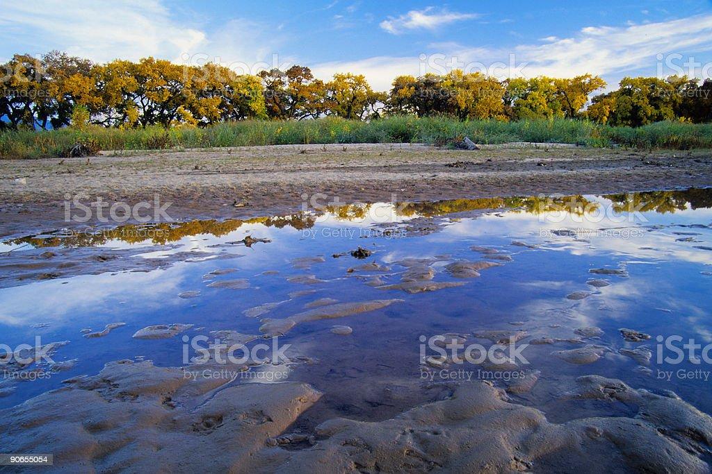 river tree reflections royalty-free stock photo