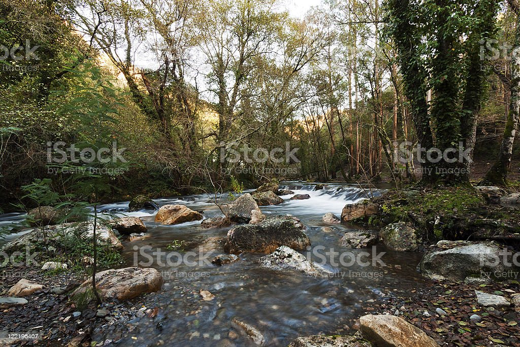 River Under Woods royalty-free stock photo