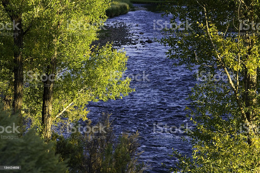 River Water Flowing with Scenic Cottonwood Trees royalty-free stock photo