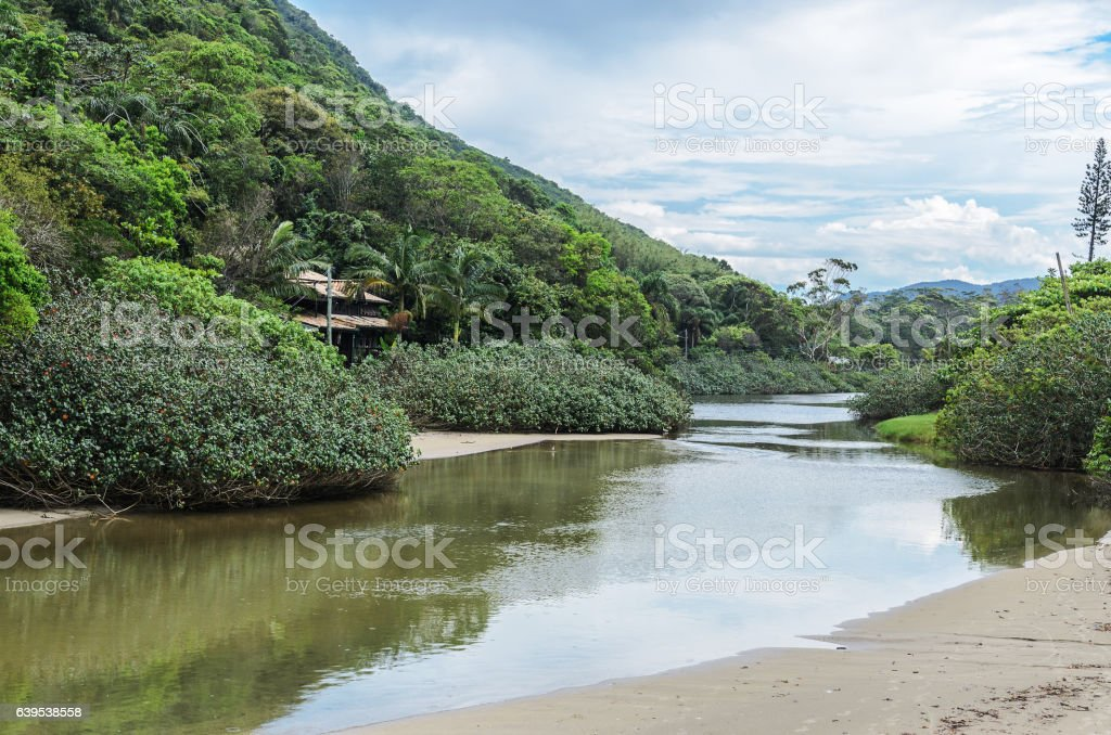 River with a brackish water stock photo