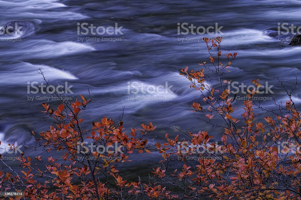 River with Red Leaves stock photo