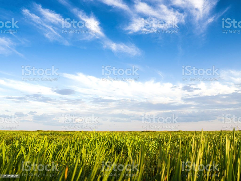 River with reed reflected in the water,Danube delta stock photo