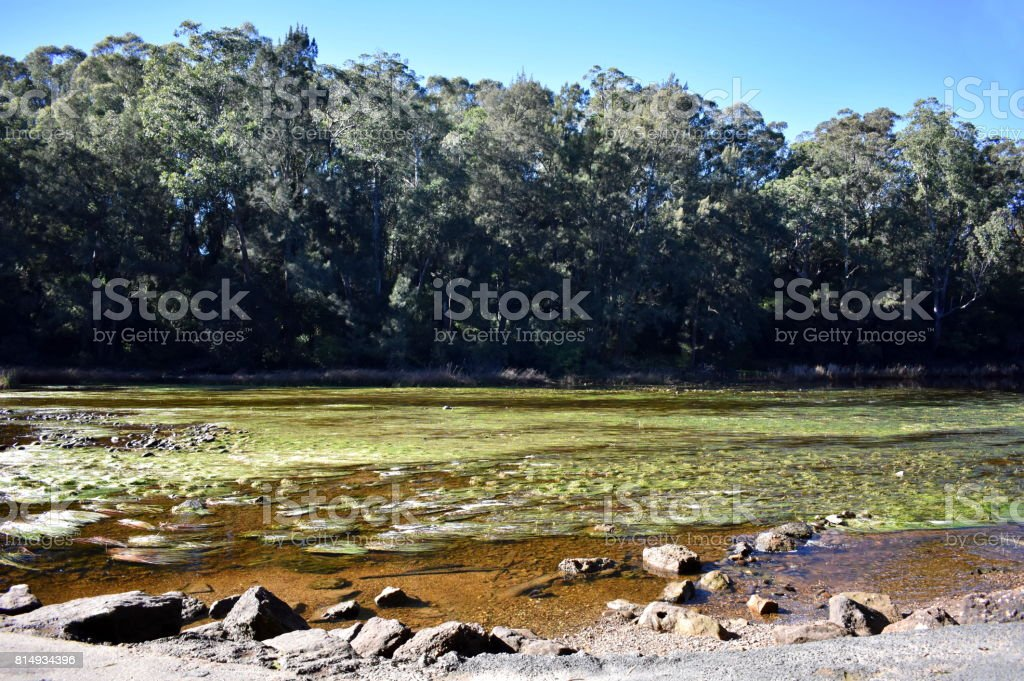 River with Seaweed stock photo