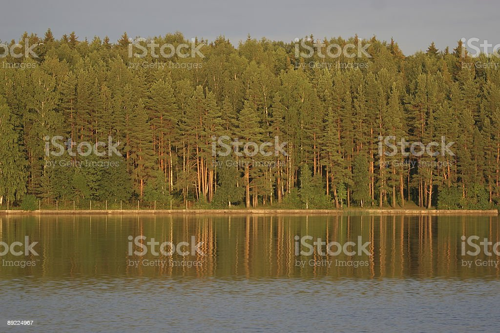 Riverbank forest royalty-free stock photo