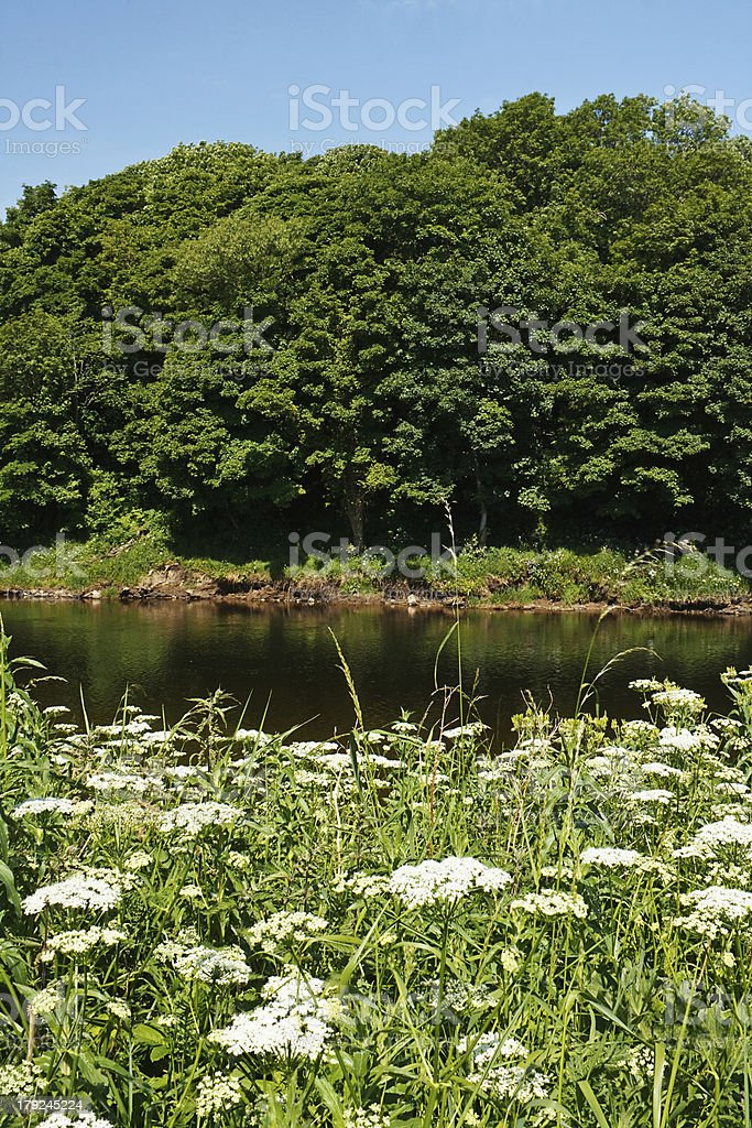 riverbank in summer royalty-free stock photo