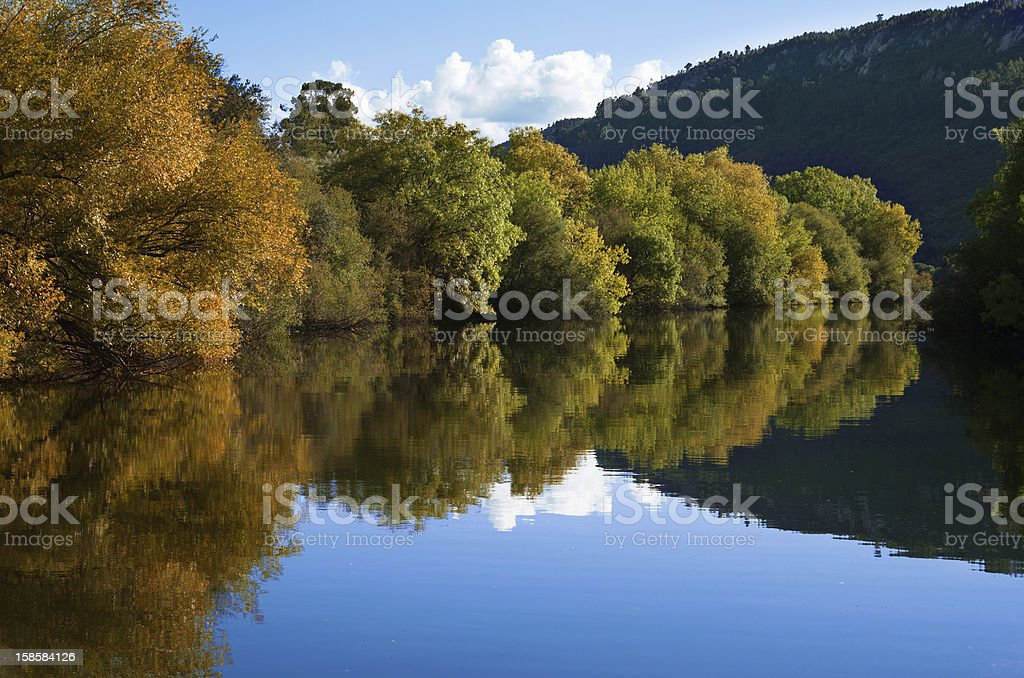 Riverbank trees and reflection royalty-free stock photo