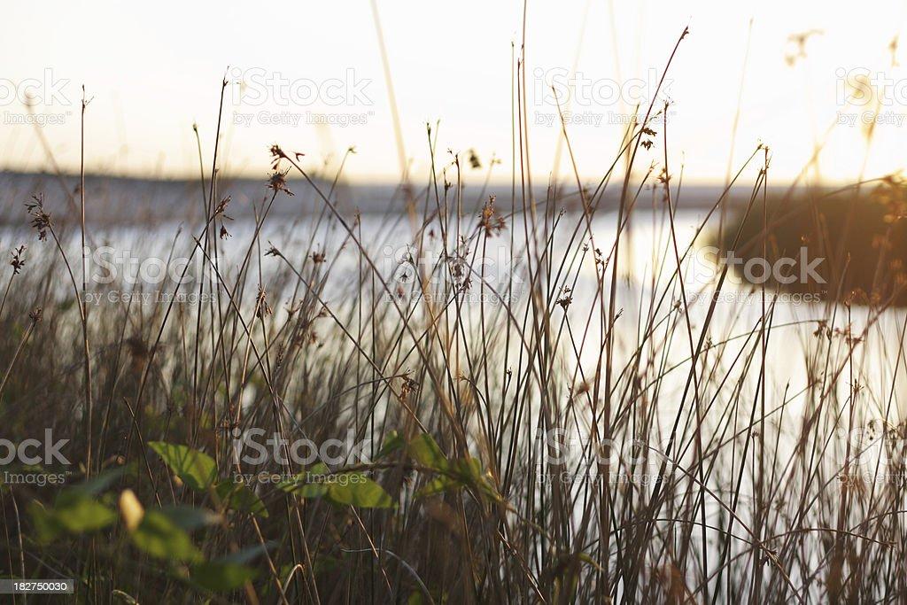 Riverbank vegetation stock photo