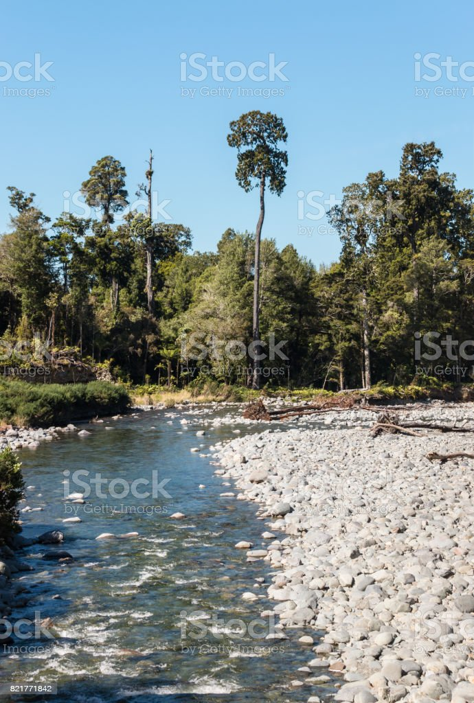 riverbed with boulders in Kahurangi National Park stock photo