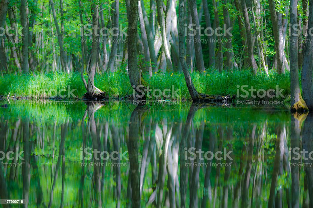 Riverlandscape in the forest stock photo