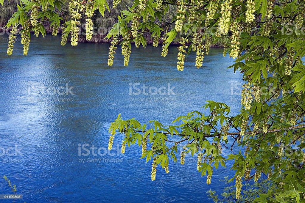 Rivers Edge stock photo