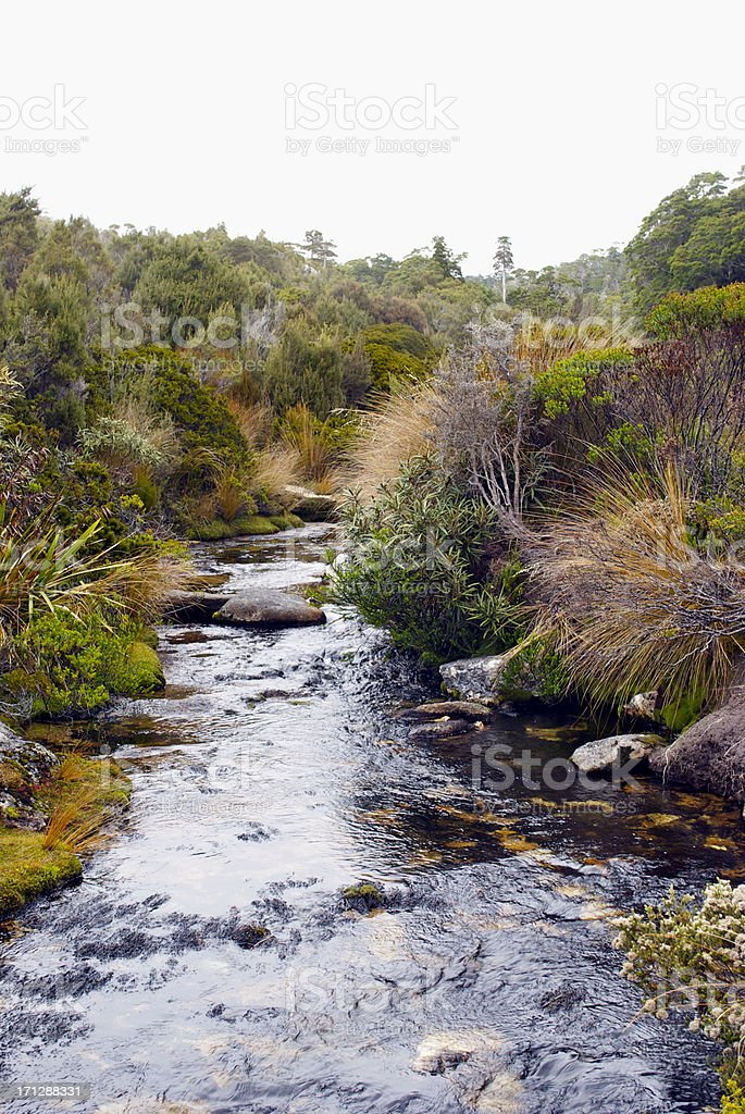 Riverscape, Inland Track on the Abel Tasman National Park, NZ royalty-free stock photo