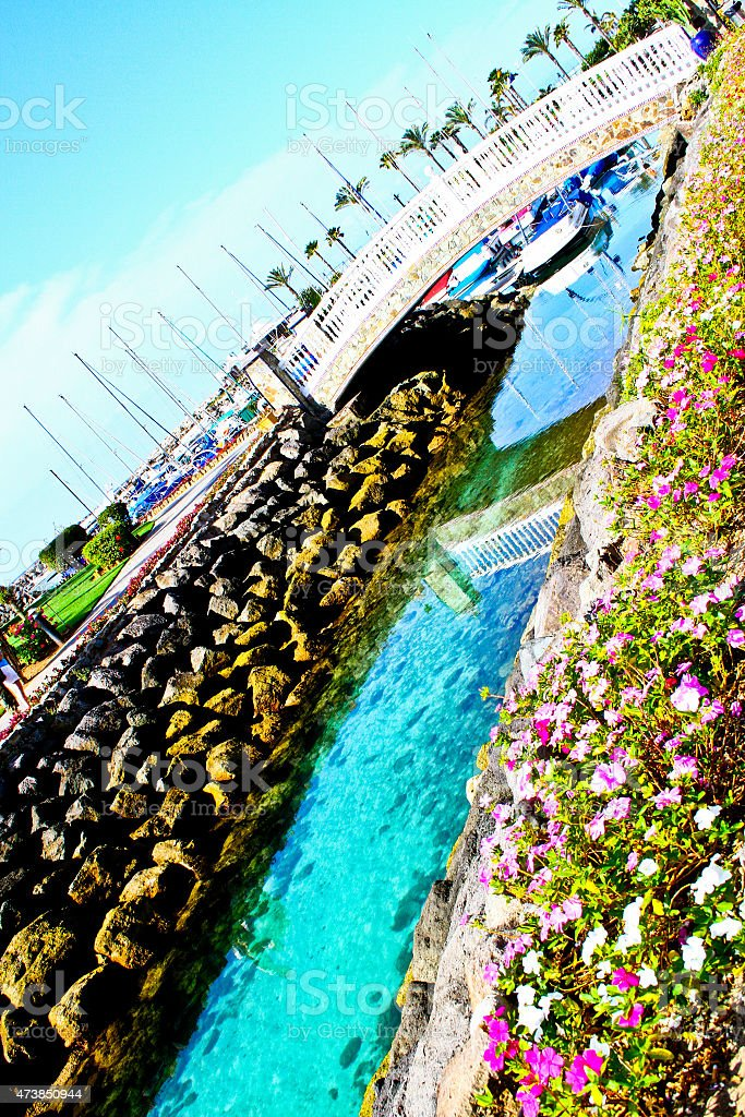 Riverside and the flowers by the water royalty-free stock photo
