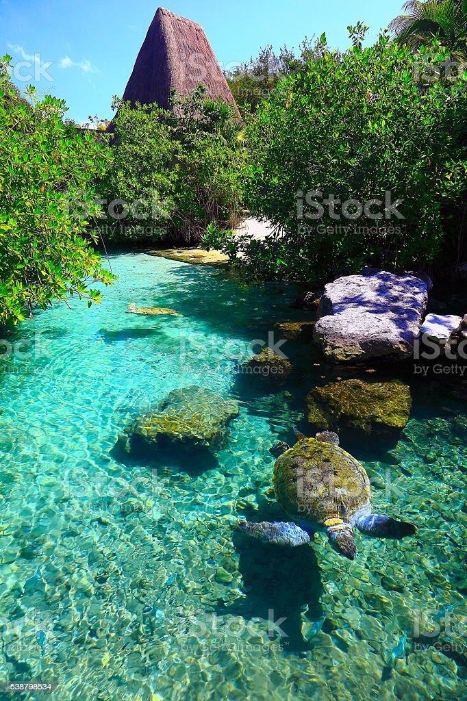 Riviera maya turquoise beach, turtles, palapa - caribbean tropical paradise stock photo