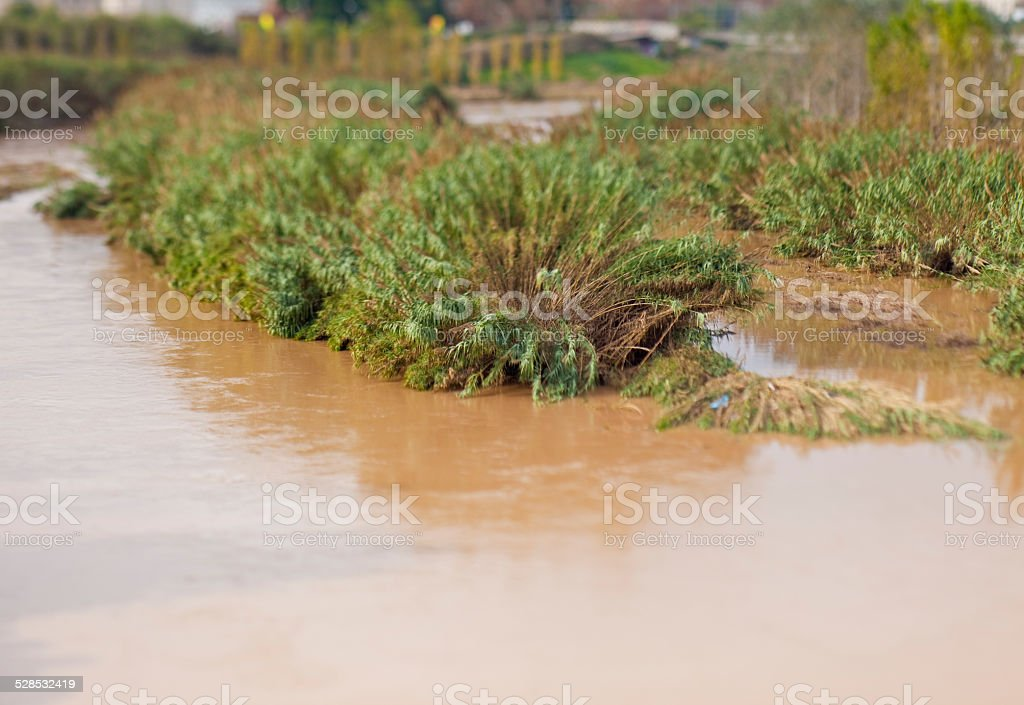 Riviere canes in the river stock photo