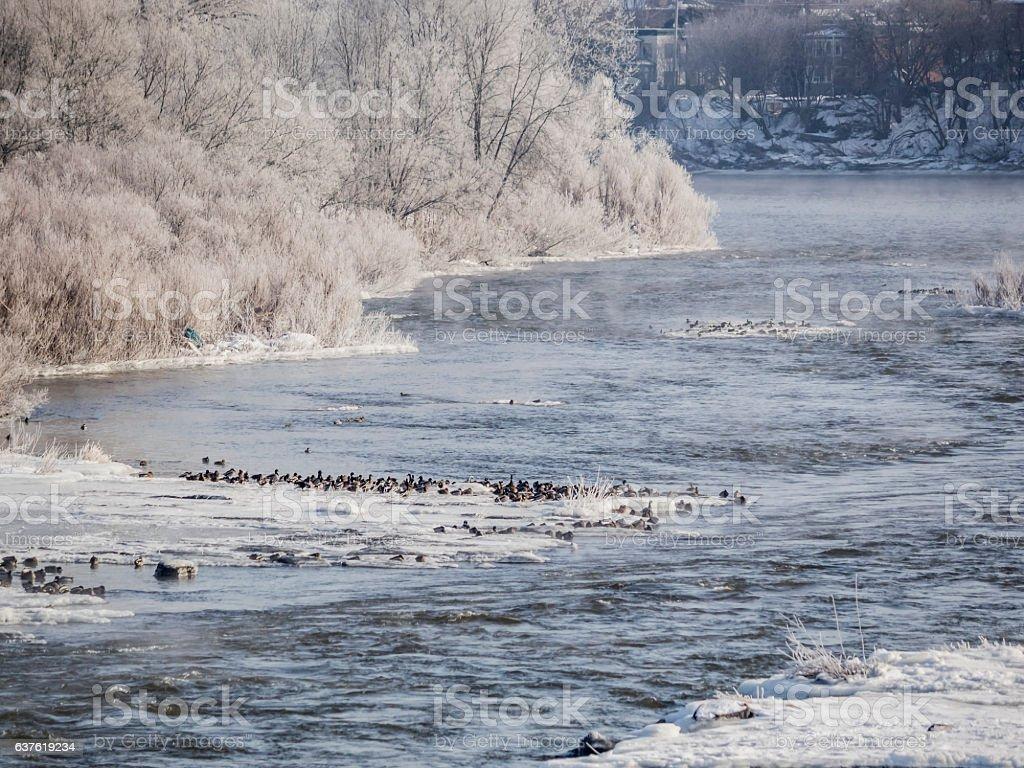 Rivière givrée stock photo