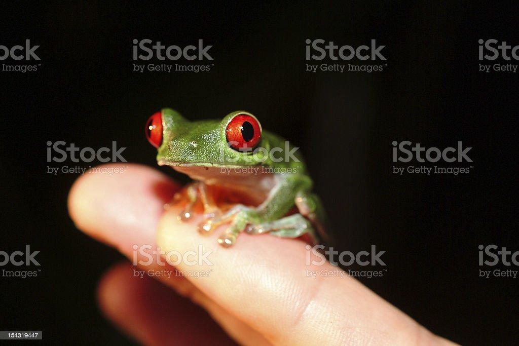 roach frog costa rica stock photo