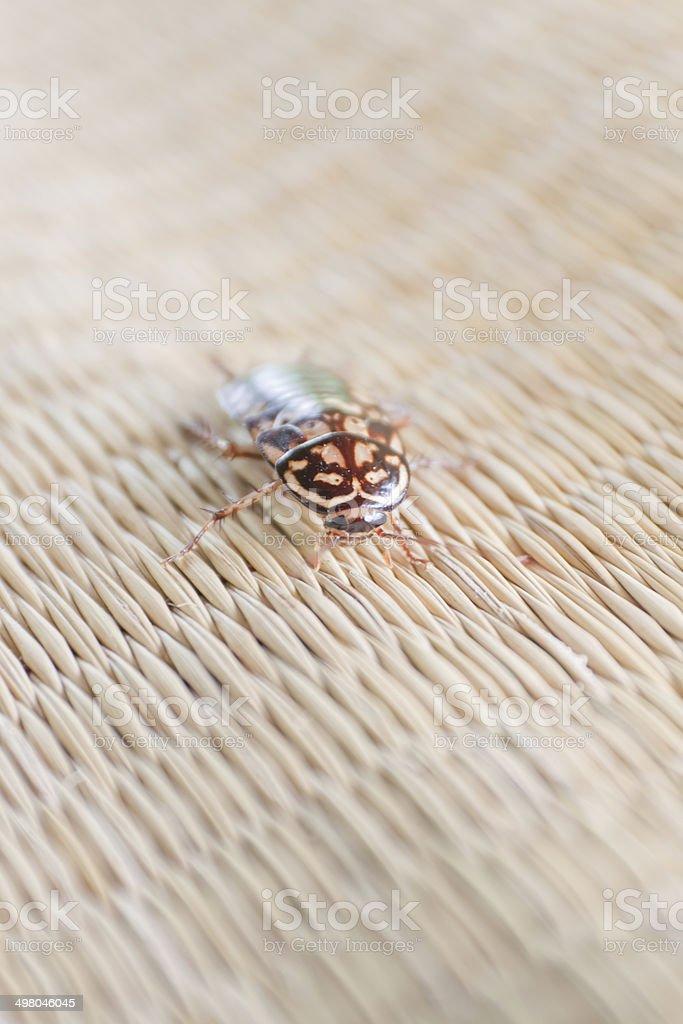 Roach on canvas mat. stock photo
