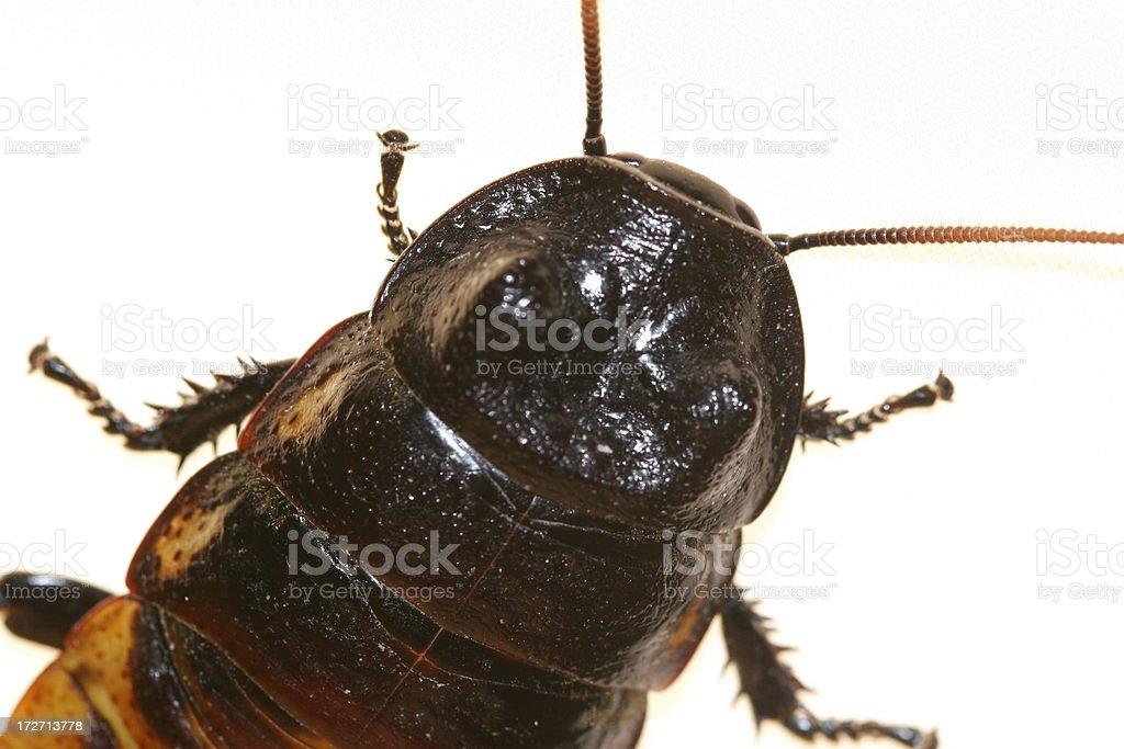 Roach stock photo