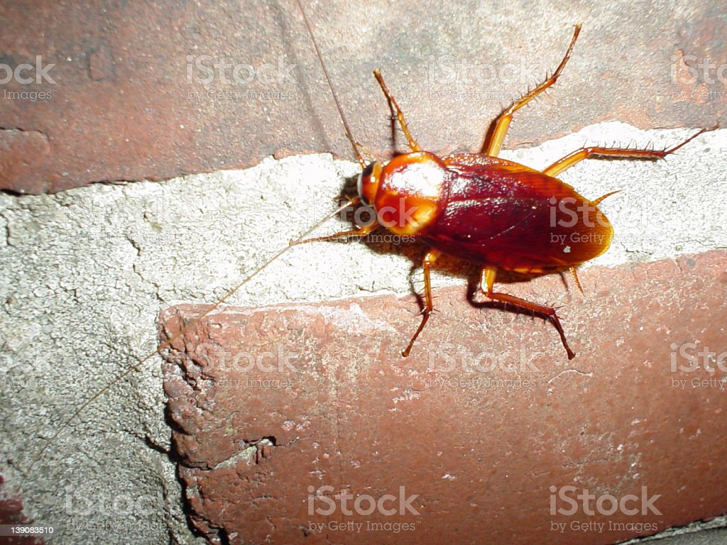 roach12 royalty-free stock photo