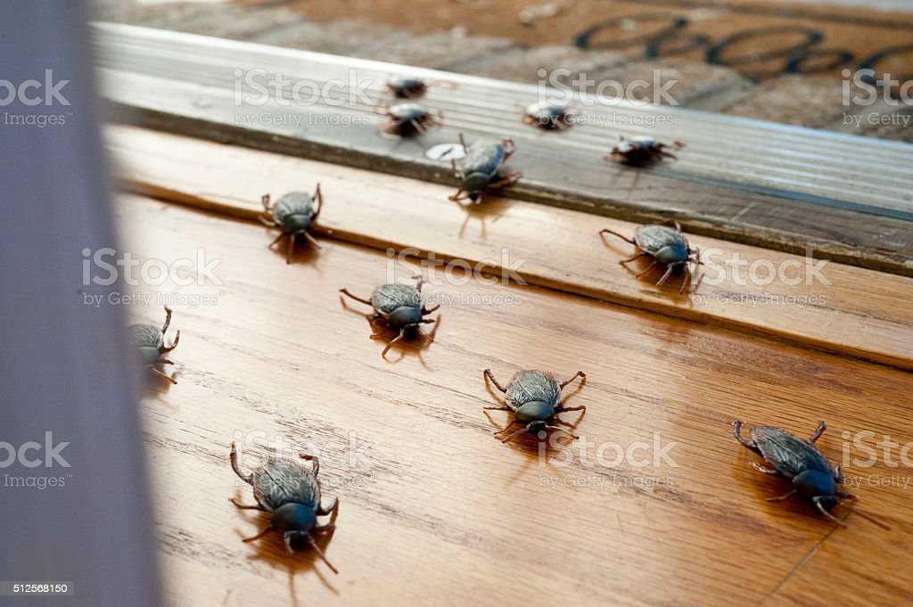 Roaches entering interior of home stock photo