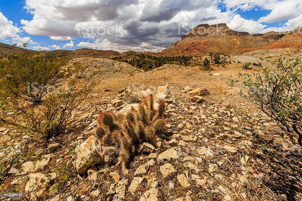 Road 1005, Littlefield, AZ 86432, USA stock photo