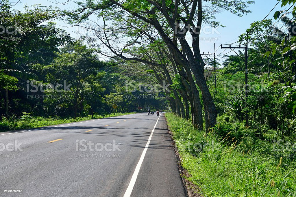Road along jungle forest, Thailand stock photo