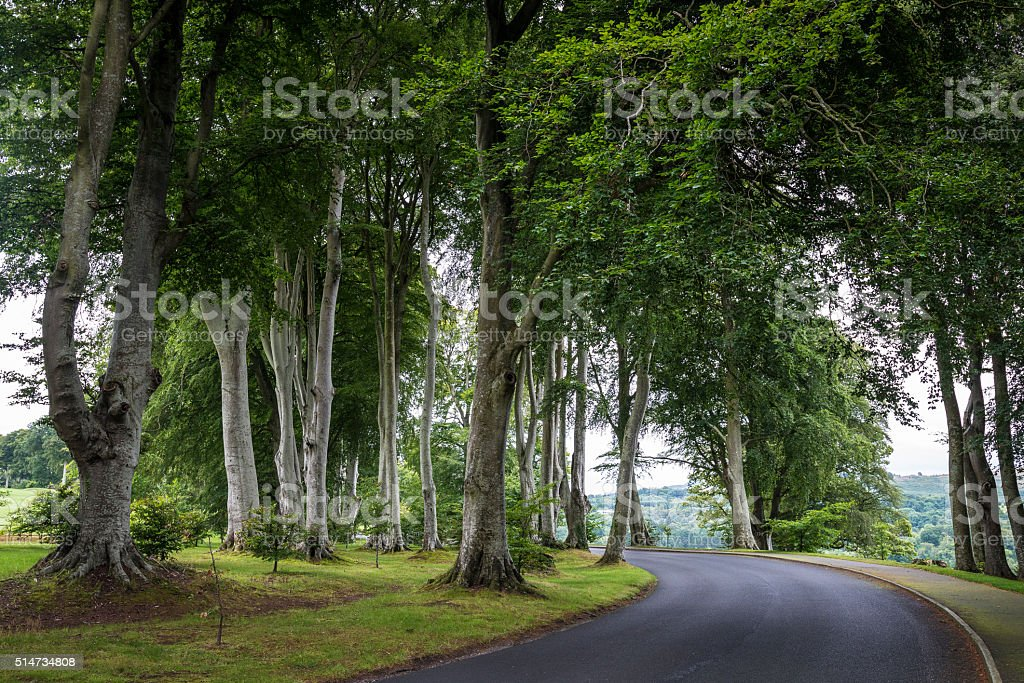 Road among tall trees. Ireland, Wicklow park stock photo