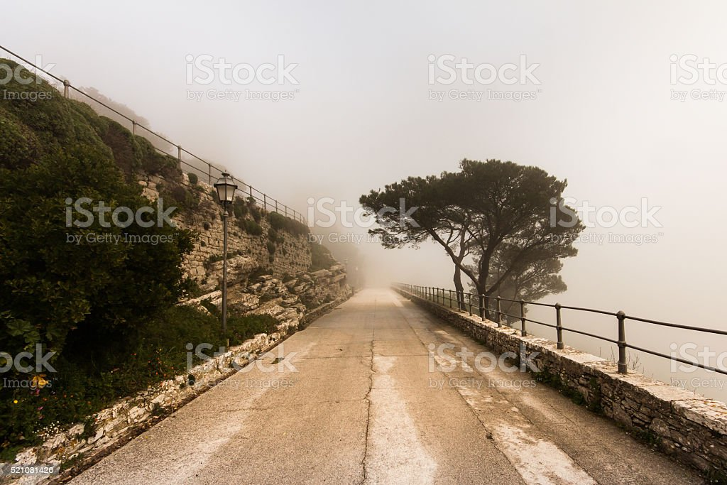 Road and a tree in dense fog stock photo