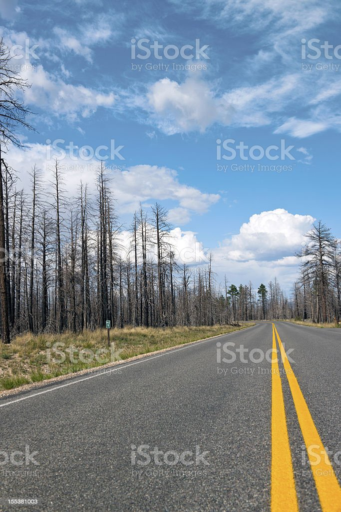Road and Burnt Trees in Bryce National Park USA royalty-free stock photo