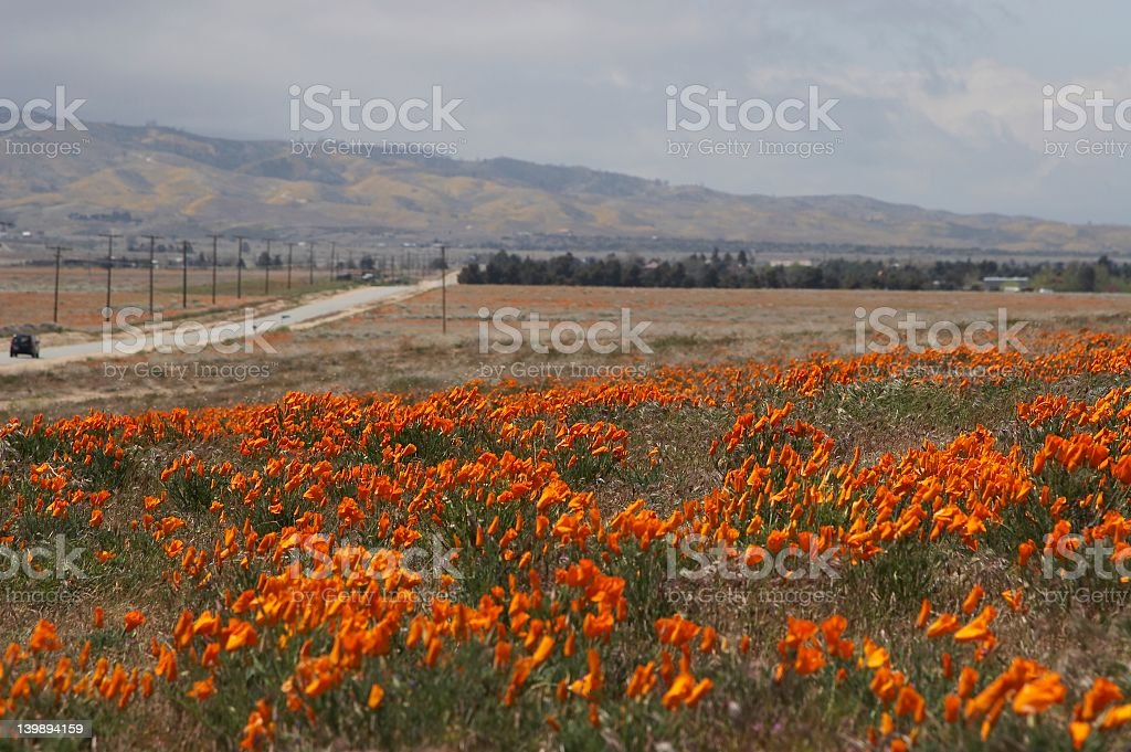 road and poppies royalty-free stock photo