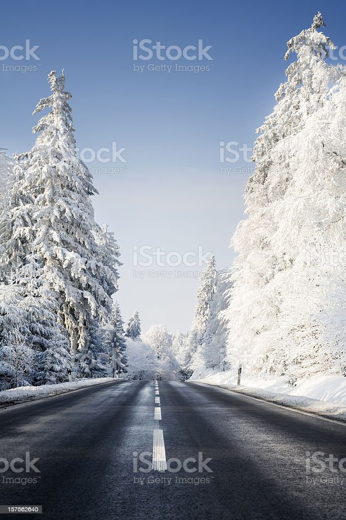 Road and snow-covered trees royalty-free stock photo