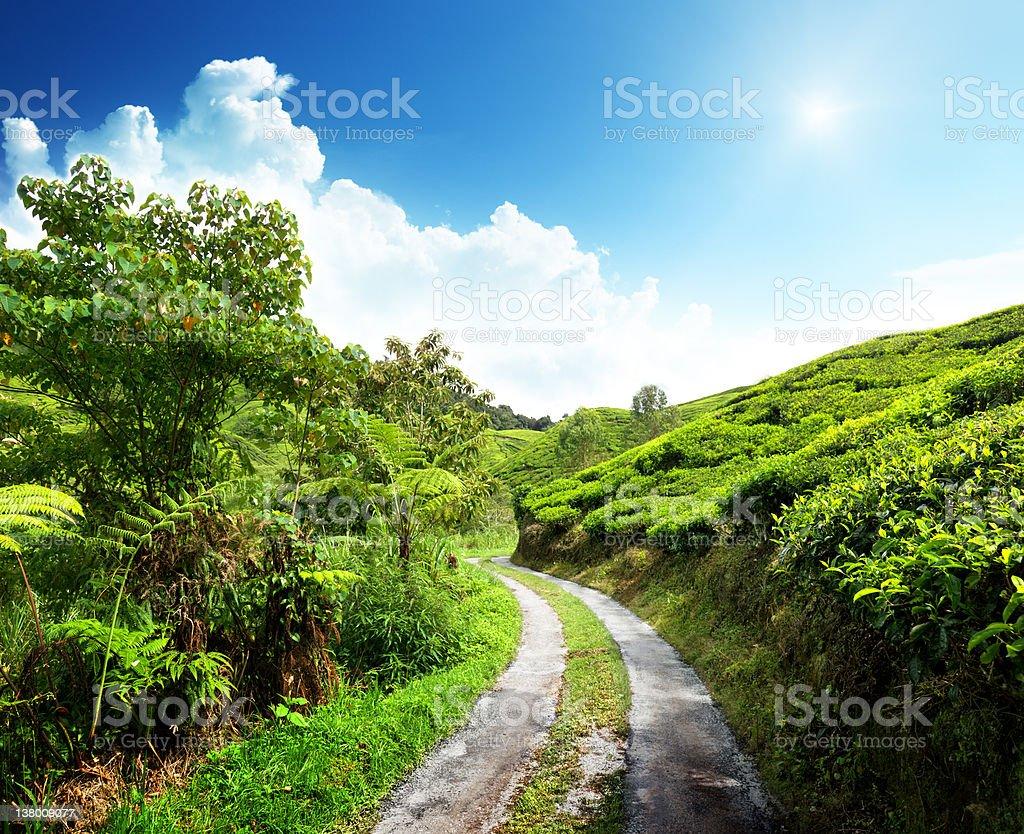road and tea plantation Cameron highlands, Malaysia royalty-free stock photo