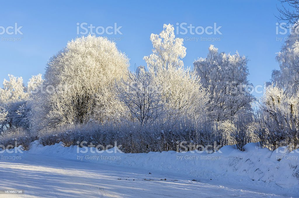 Road and trees in winter royalty-free stock photo