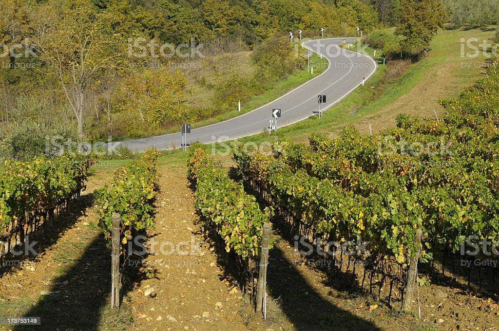 Road and vineyard royalty-free stock photo