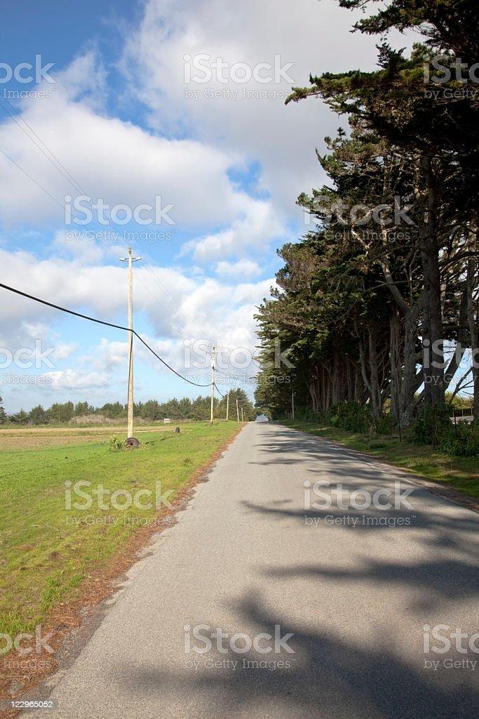 Road and Windbreak stock photo