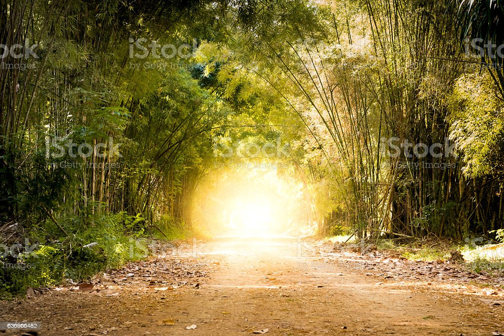 road bamboo forest and light at the end of tunnel stock photo