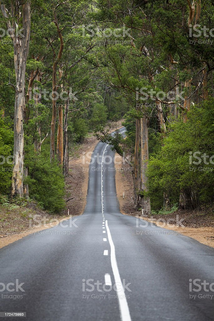 Road bends through the woods royalty-free stock photo