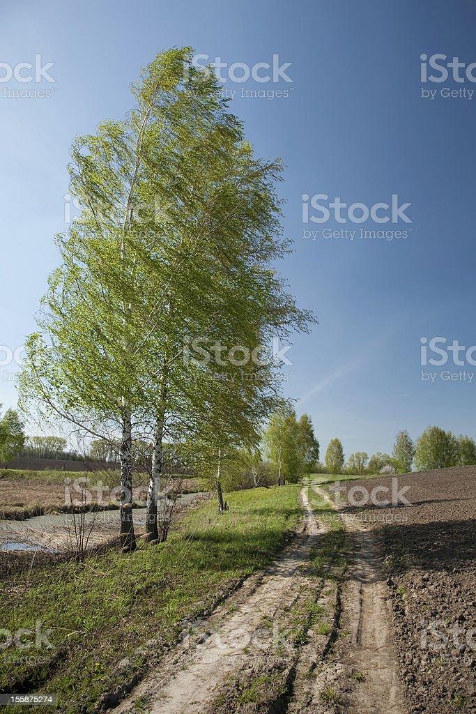 Road, birch, plow royalty-free stock photo