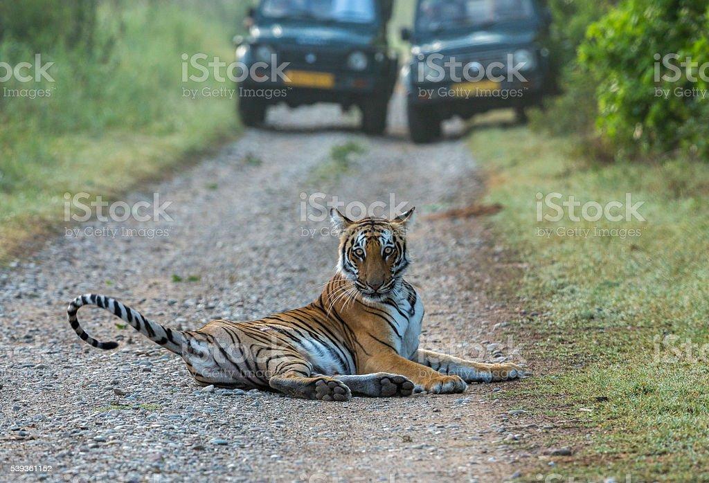 Road Block by Tigress stock photo
