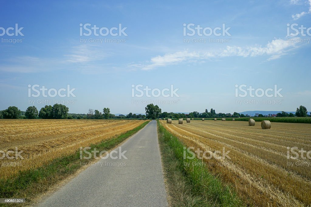 road by wheat field with hay rolles near speyer germany stock photo