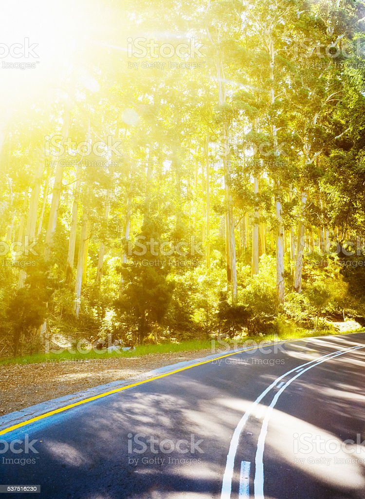 road, countryside, curve, bend, trees, sunlight, nature, exterior stock photo